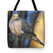 Mourning Dove On Limb Tote Bag