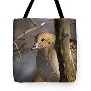 Mourning Dove Pictures 39 Tote Bag