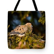 Mourning Dove Pictures 64 Tote Bag