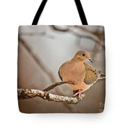 Mourning Dove Pictures 71 Tote Bag