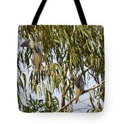 Mourning Doves Landing In Eucalyptus  Tote Bag