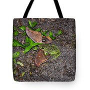 Mouthful Of Moth Tote Bag