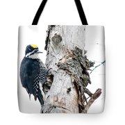 Mr. Black-bscked Woodpecker Tote Bag