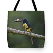 Mr. Colorful.. Tote Bag