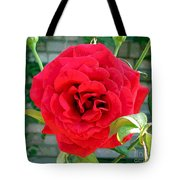 Mr Lincoln Rose Tote Bag