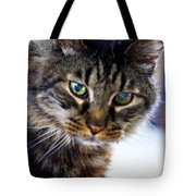 Mr. Lynx - Tabby - Cat Tote Bag