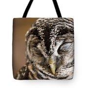Mr Sleepyhead Tote Bag by Anne Gilbert