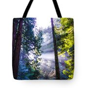 Muir Woods - Fog And Light Tote Bag