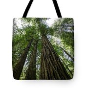Muir Woods I Tote Bag