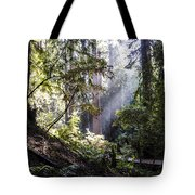 The Forgotten Path Tote Bag