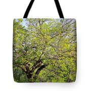 Mulberry Tree Tote Bag