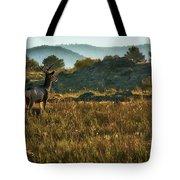 Mule Deer At De Weese Reservoir Tote Bag