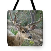 Mule Deer Buck In Velvet Tote Bag