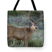 Muley Buck In Velvet Tote Bag
