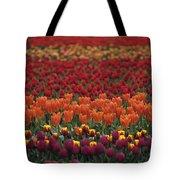 Multi-colored Tulip Fields  Tote Bag