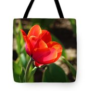 Multicolored Tulip Tote Bag