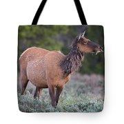 Munching Elk Grand Teton National Park Tote Bag