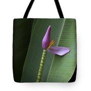 Musa Ornata - Pink Ornamental Banana Flower - Kepaniwai Maui Hawaii  Tote Bag