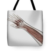 Muscle Anatomy Of Human Arm And Hand Tote Bag