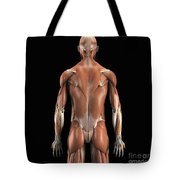 Muscles Of The Upper Body Rear Tote Bag