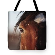 Mustang Battle Wounds Tote Bag