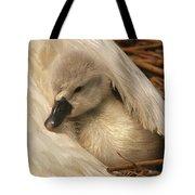 Mute Swan Cygnet Under Wing Tote Bag