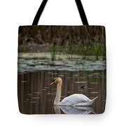 Mute Swan Pictures 143 Tote Bag