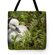 Mute Swan Pictures 210 Tote Bag