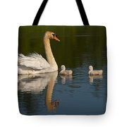 Mute Swan Pictures 244 Tote Bag