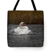 Mute Swan Pictures 97 Tote Bag