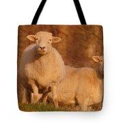 My Sheep ...   Tote Bag
