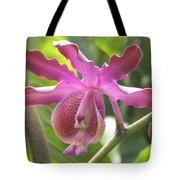 Myrmecophila Orchid Tote Bag