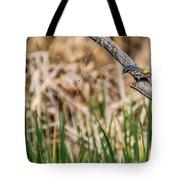 Myrtle Warbler Colors Tote Bag