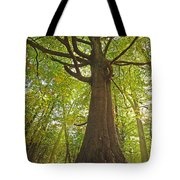 Mystical Forest Tree Tote Bag