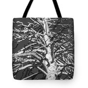 Naked And Barren Tote Bag
