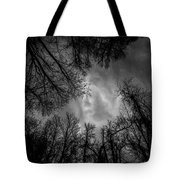 Naked Branches Tote Bag