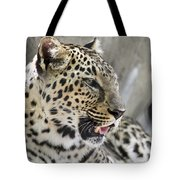 Naples Zoo - Leopard Relaxing 1 Tote Bag
