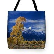 Narrowleaf Cottonwoods Fall Color Teton Tote Bag