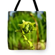 Nature Green Fern Frond Unfolding Art Prints Ferns Tote Bag