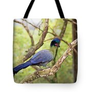 Natures Beauty Tote Bag by Aimee L Maher Photography and Art Visit ALMGallerydotcom