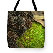 Nature's Moss And Sweetgum Pods Tote Bag