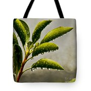 Natures Teardrops Tote Bag