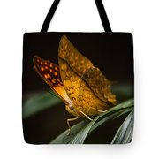 Nature's Wonders  Tote Bag