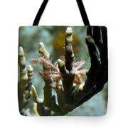 Neck Crab - Macro Undersea Reef Life Tote Bag