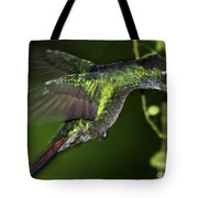 Nectar Feeding Hummingbird Tote Bag