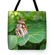 Neptis Hylas / Common Sailer Butterfly Tote Bag