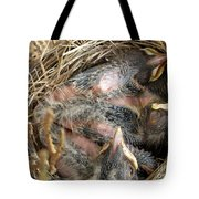 Nest Of American Robins Tote Bag