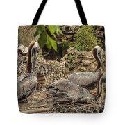 Nesting Brown Pelicans Tote Bag