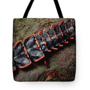 Net-winged Beetle  Borneo Tote Bag