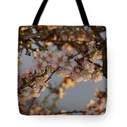 New Blossoms - Old Almond Tree Tote Bag
